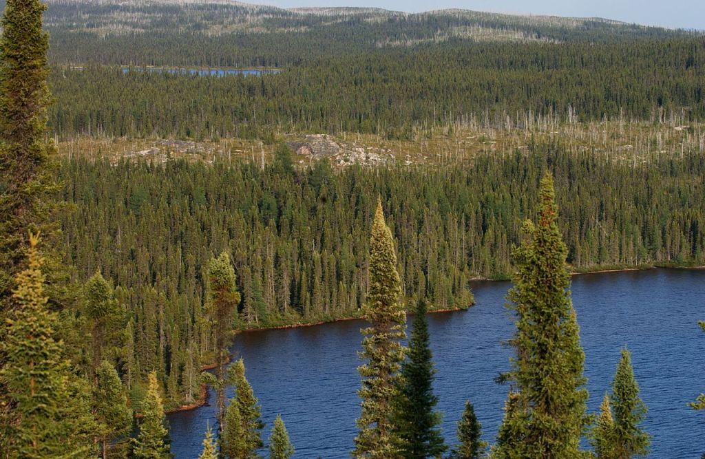 px Taiga Landscape in Canada