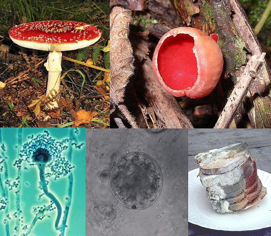px Fungi collage