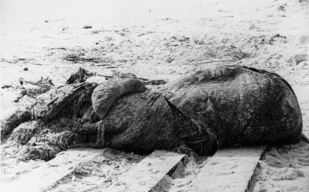 St augustine carcass