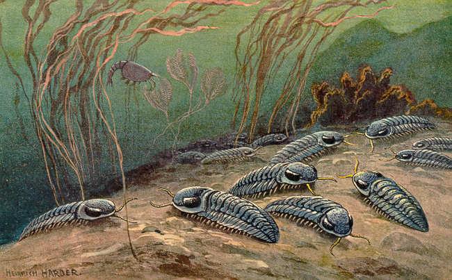 Trilobite Heinrich Harder