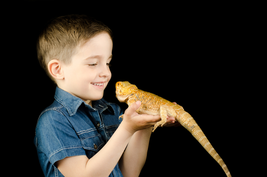 Find A Reptile Show for Birthday Parties