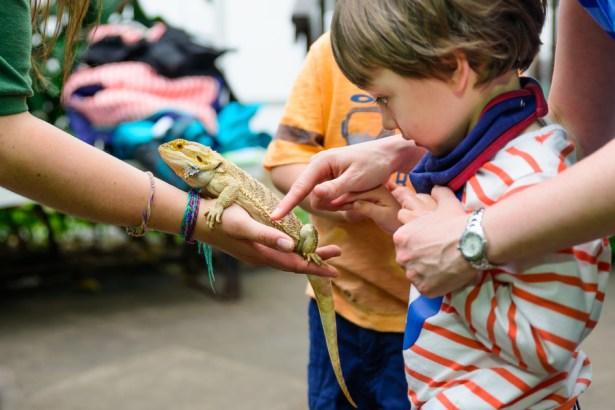 kids reptile parties