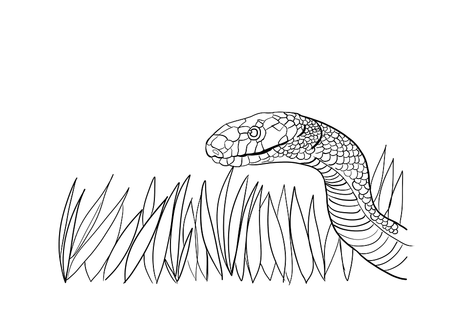 Snake Coloring Pages C S W D