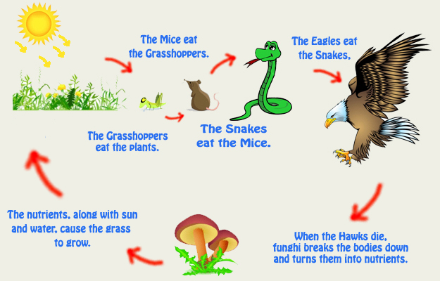 Complete circle foodchain