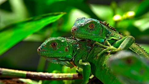 Lizards, Turtles, and Snakes, Oh My – Reptiles at a Birthday Party