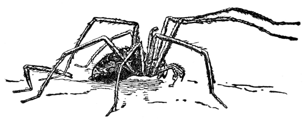 Arachnid Coloring Pages C S W D