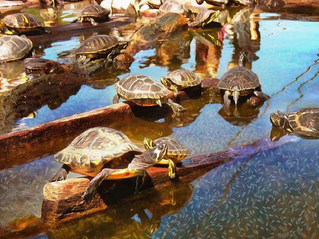 tortoise turtle Stock Free Image  image