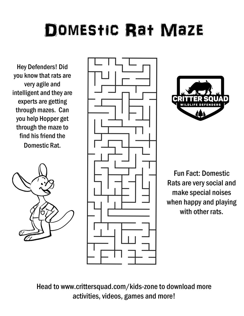 domestic rat maze