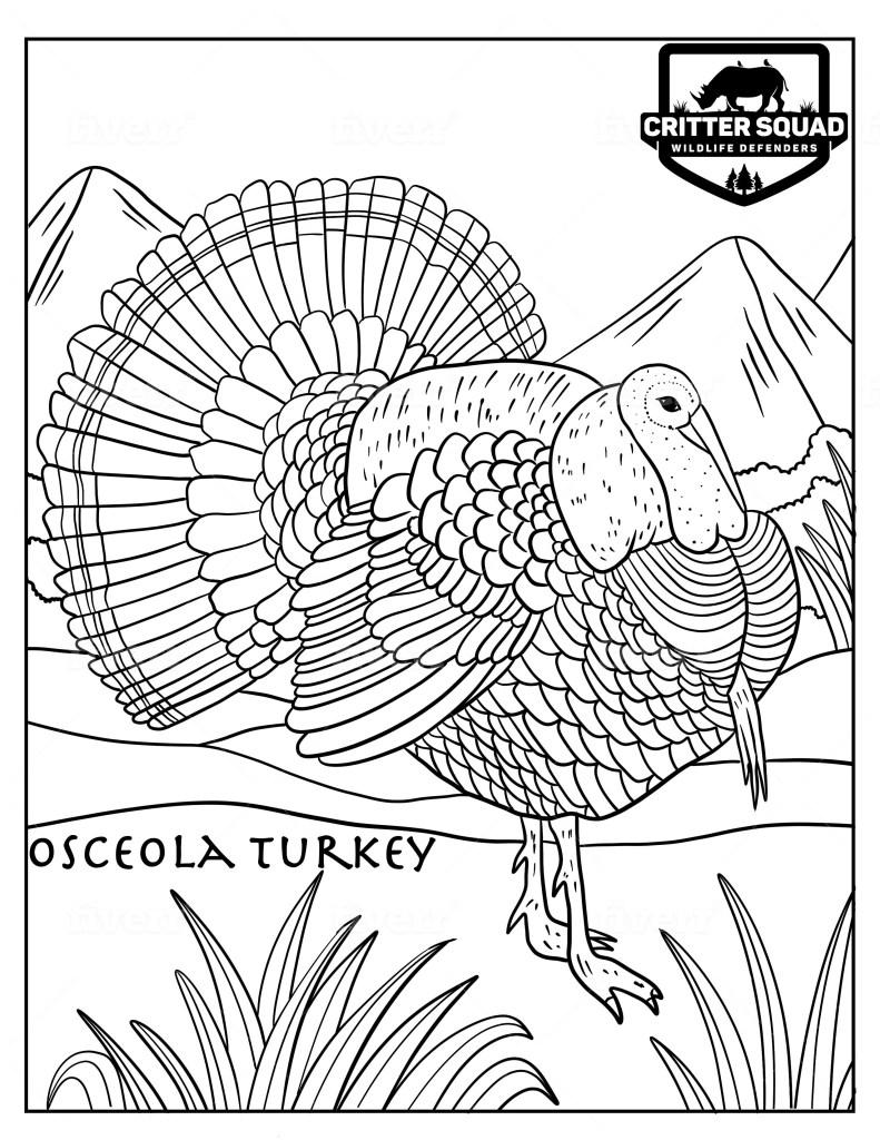 Osceola Turkey