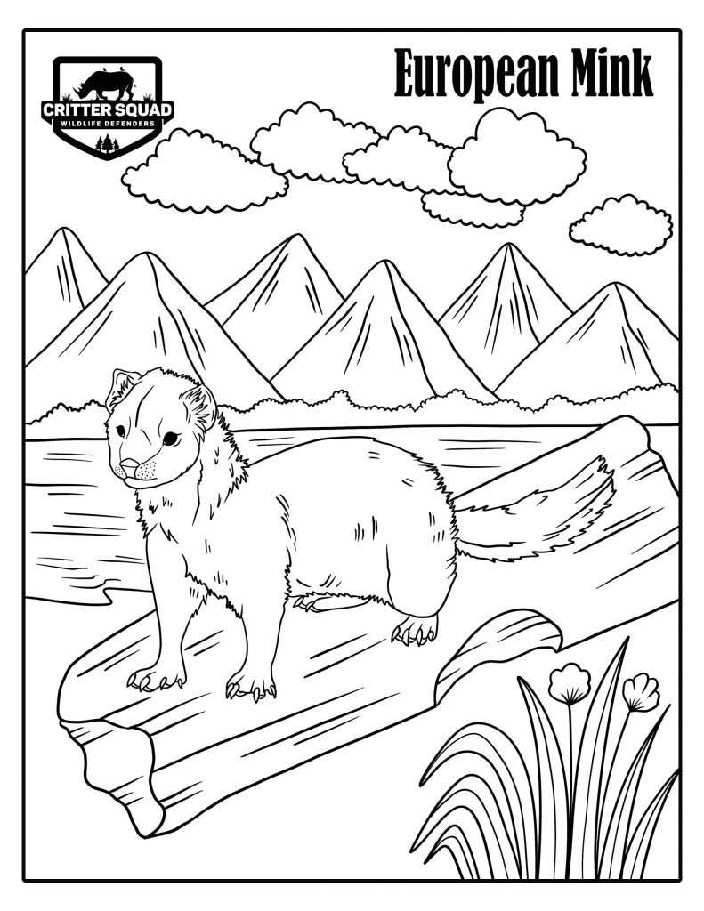 European Mink coloring page
