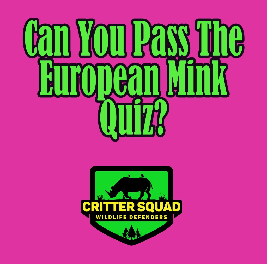 european mink quiz