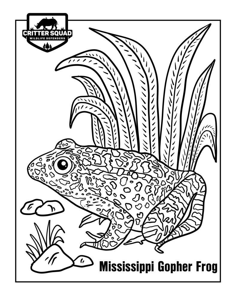 mississippi gopher frog