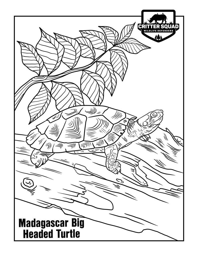 madgascar big headed turtle