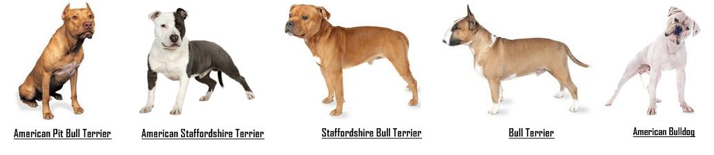 Blue Pitbull Puppy Weight Chart