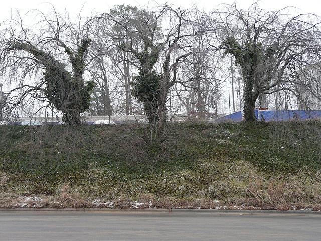 Durham, North Carolina, January 2011