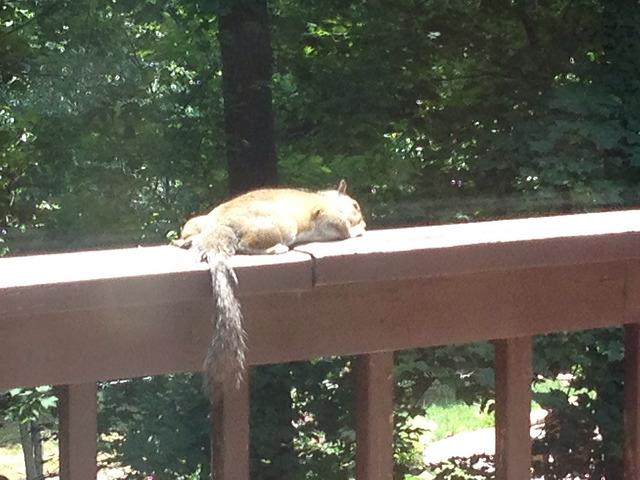 squirrel on my back deck