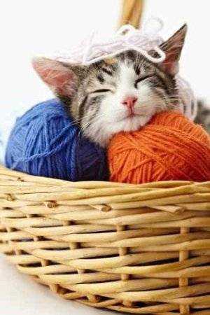 https://i2.wp.com/www.crochetconcupiscence.com/wp-content/uploads/2012/07/cat-yarn.jpg