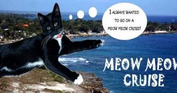 Meow Meow Cruise 2019: la crociera per chi ama i gatti