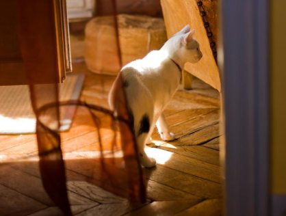 Cat – Chubby life