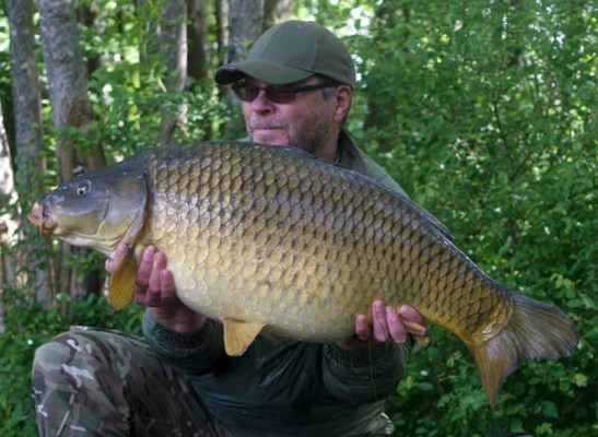 Lovely mint conditioned common of 36lb