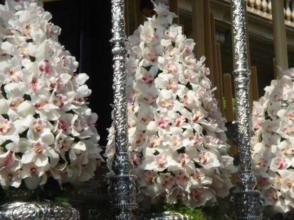 ornamento-floral