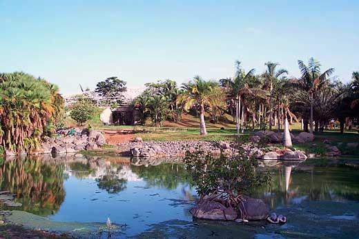 Palmetum, Jardín Botánico de Santa Cruz de Tenerife.