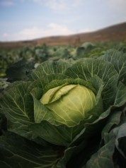 Growing your own fruit and veg helps to reduce food waste
