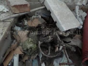 Il gatto sacrificato trovato nella villa comunale di Napoli
