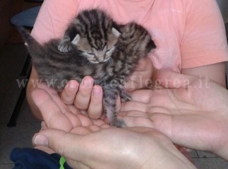 I gattini abbandonati