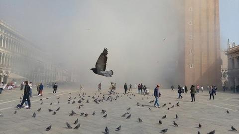 Rapina col fumogeno in gioielleria a Venezia, sventata dalle commesse, San Marco in fumo. Un piccione se ne va infastidito