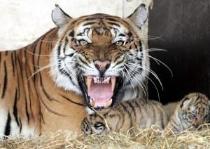 Animali non provano dolore ed emozioni: studio inglese fa discutere