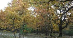 Cadavere incappucciato e legato a un albero: orrore in provincia di Varese