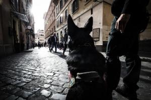 Terrorismo, allarme Interpol: 50 combattenti Isis arrivati in Italia con i barconi