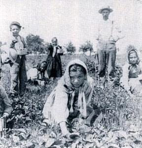 Contadine immigrate 1890
