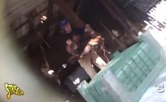 Striscia a Cuggiono la macellazione clandestina (video) Piazza Litta Prima Pagina