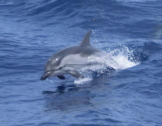 Governo Renzi cede il santuario dei delfini in toscana