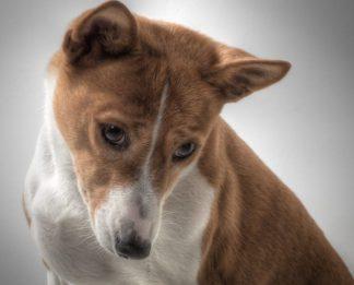 cane-324x261 Un nuovo caso di cane avvelenato. Chi sparge il veleno? Piazza Litta (Ossona) Prima Pagina