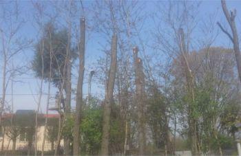 alberi-350x227 Potatura degli alberi ad alto fusto. Che disastro! ( E Gibo non dice nulla) Piazza Litta Prima Pagina