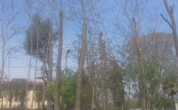 alberi e potatura
