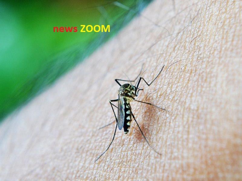 Buccinasco, un caso di febbre dengue: uomo colpito dal virus, scatta la disinfestazione