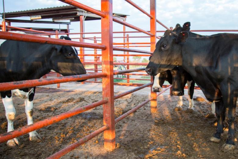Igualdad Animal: La crueldad en los rastros de Jalisco | La Crónica de Hoy - Jalisco