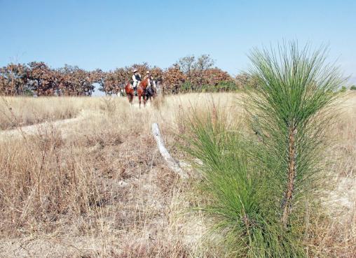 Colecta de ayuda por el Bosque de El Nixticuil | La Crónica de Hoy - Jalisco
