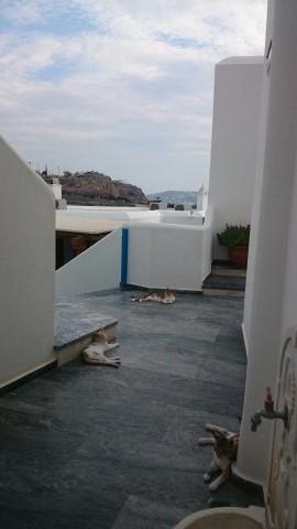 Un día en Mykonos. El hotel de los gatos.