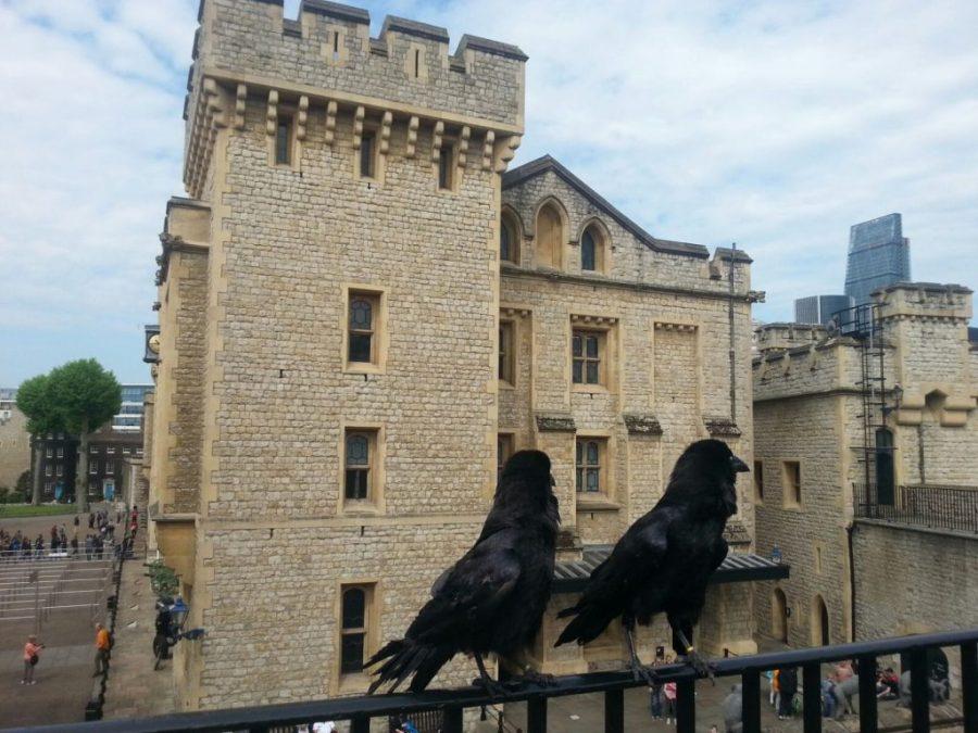 Cuervos en la Torre de Londres.