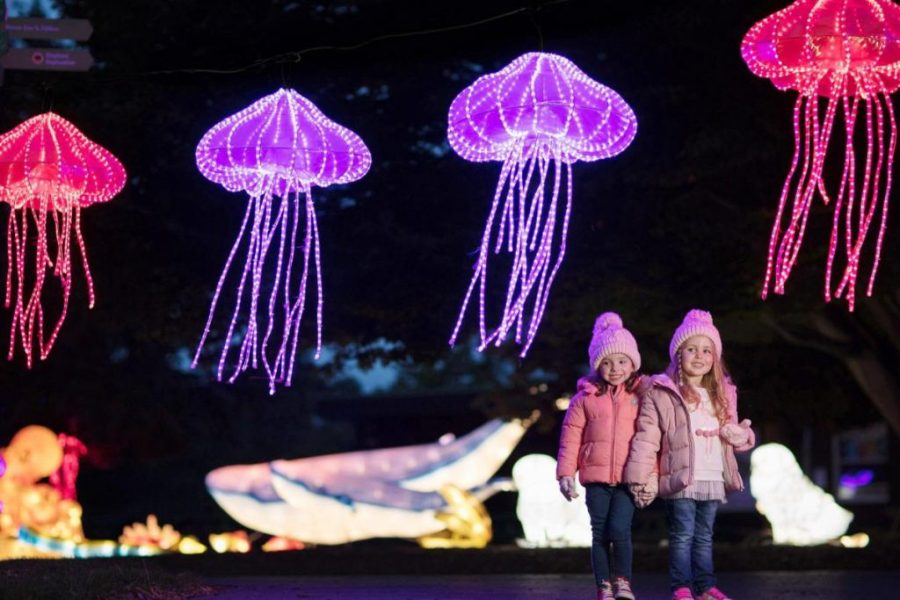 Zoo de Dublín con niños. Espectáculo Wild Lights