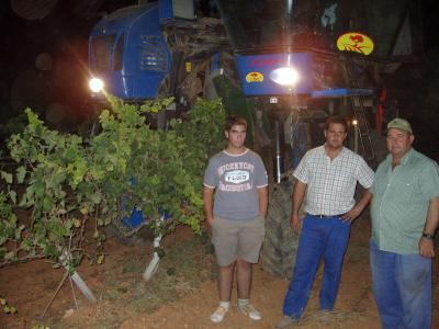 20080828192953-vendimia-nocturna-uva-tinta.jpg