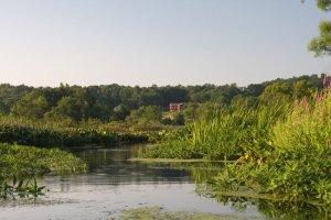 Geneva Swamp