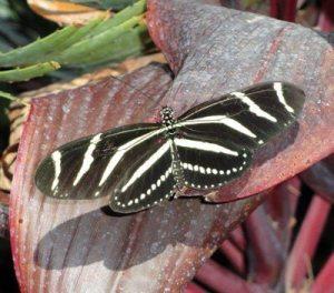 Fluttering of Butterfly Wings Ripple in My Soul