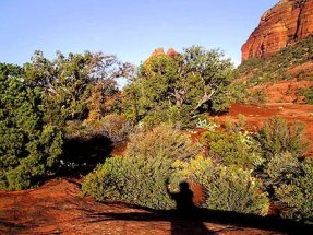 Nature awareness, deep observing. Sedona outdoor seminars with Crossing Worlds Journeys. photo by Sandra Cosentino.