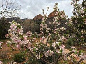 Spring Renewal Insight Retreats in Sedona, Arizona